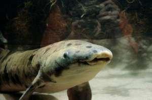 世界最长寿鱼离世 它毕生大部分时间在模仿一段掉落的木头