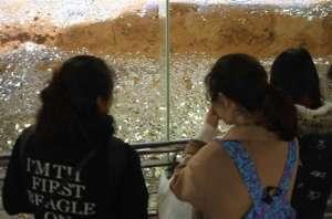 雷峰塔变金银岛 一眼望去地面上密密麻麻的都是硬币