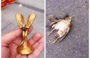 劳斯莱斯和鸟相撞 死去的小鸟-有想过我的感受吗?