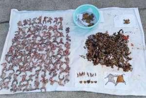 抓癞蛤蟆被刑拘 捕捉50只以上就属于重大刑事案件