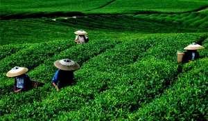 """贵州保险业加力供给侧改革促进""""三农""""发展"""