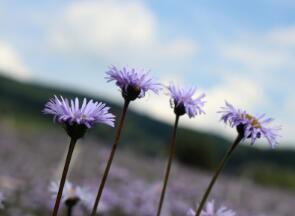 什么是云南省特色植物药
