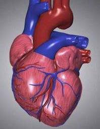 慢性心衰的最重要诱因
