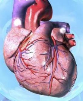 急性心力衰竭主要临床表现